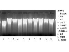 MP王牌产品土壤DNA提取试剂盒买五送豪礼-毕特博图1