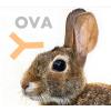 兔抗鸡卵清白蛋白