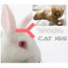 兔抗猫IgG(H+L)