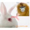 兔抗猴IgG(H+L)