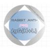 兔抗猪IgG(H+L)