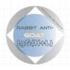 兔抗山羊IgG(H+L)