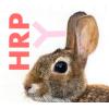 兔抗辣根过氧化物酶