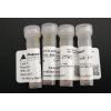 细胞膜荧光探针DiD标记液