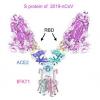 新型冠状病毒S1蛋白(His Tag)