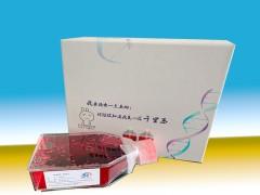 A7r5大鼠胸大动脉平滑肌细胞