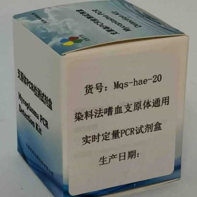 染料法嗜血支原体通用实时定量PCR试剂盒