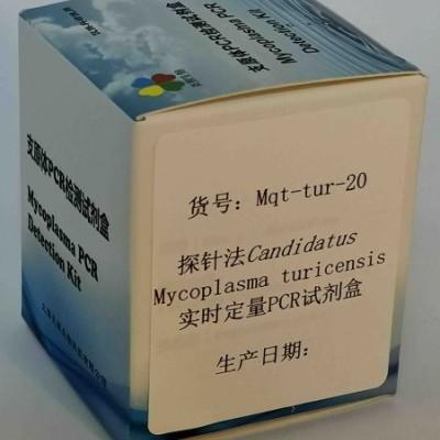 探针法M. turicensis实时定量PCR试剂盒