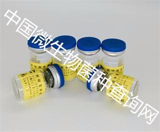 ATCC 25416 洋葱伯克霍尔德氏菌